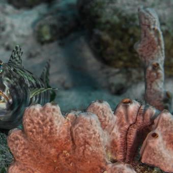Eidechsenfisch-2.jpg