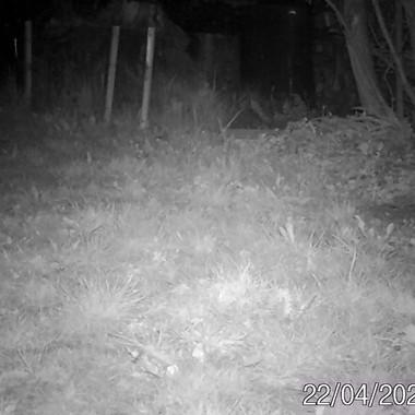 Maus in der Nacht
