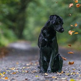 Herbstboten 1-1-03633.jpg