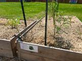 Garden starts!