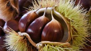 Les châtaignes : un fruit très nutritif