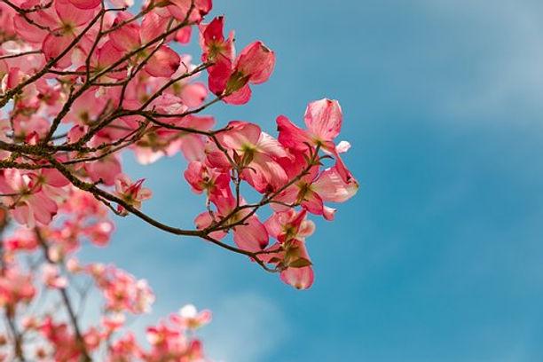blossom-4151081__340.jpg