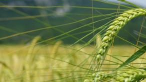 Les principes de base de l'agriculture biologique