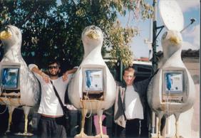 Seagull Phones