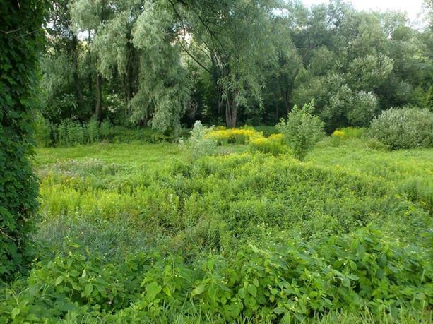 Зелена зона на Совських ставках