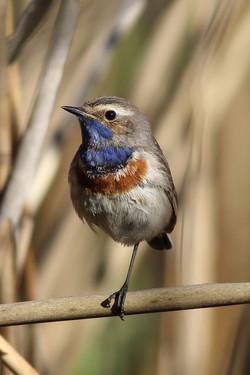 bird_synoshyyka.jpg
