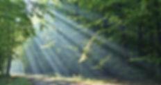 Within Senses Esther Neela Blog
