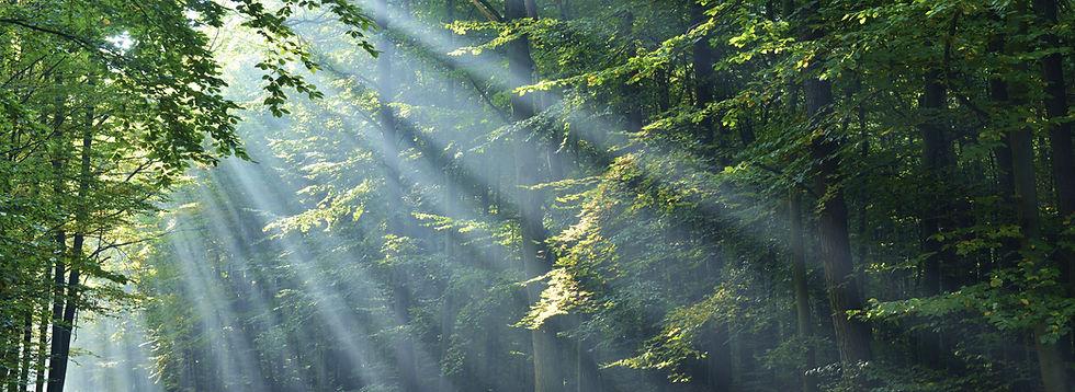 Méditer dans la Nature