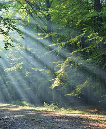 Sunshine rays in a forest
