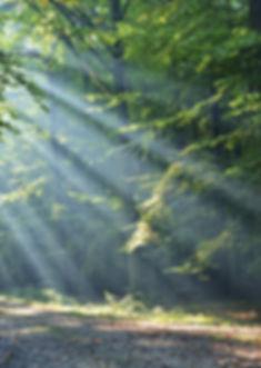 Michel Gagnor | Hypnothérapeute | Séance d'hypnose en forêt 2