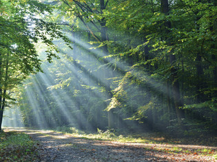 Forest Bathing for happiness