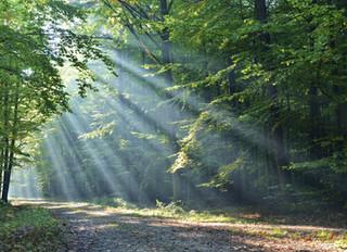 Wundermittel Waldspaziergang!