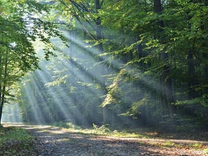 הטבע - הוא מרחב לריפוי.
