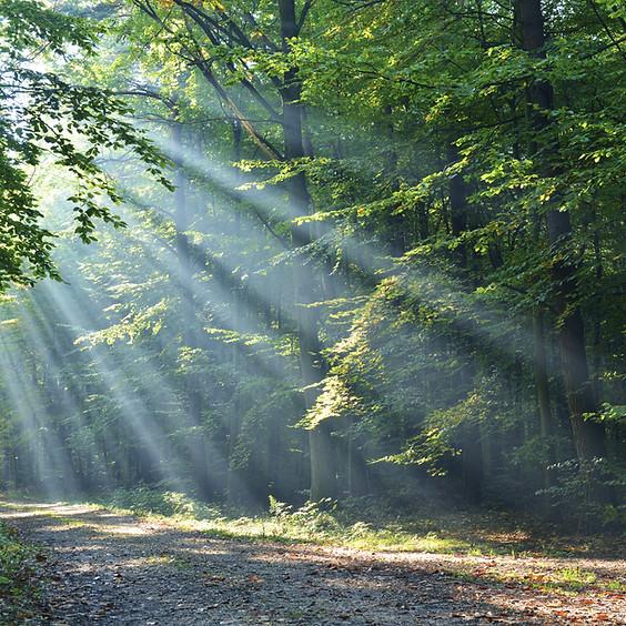 Old Folklore: Tree Magic