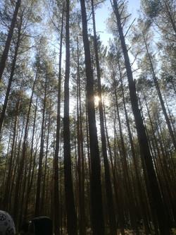 יער לפוחובה