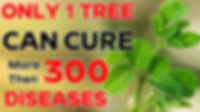 miracel tree2.jpg