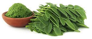 moringa leaf poweder.jpg