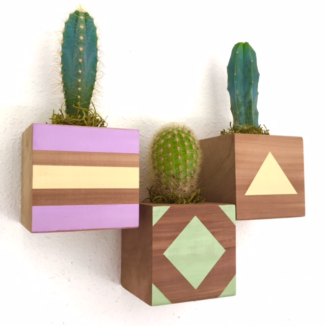 floating cactus cubes