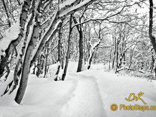 Sundance Snow Path