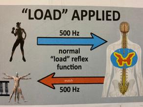 "A ""No Brainer"":  Muscles Work by Reflex"