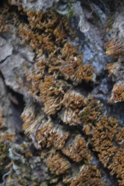 orange lichen.JPG