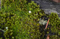 close up moss.JPG
