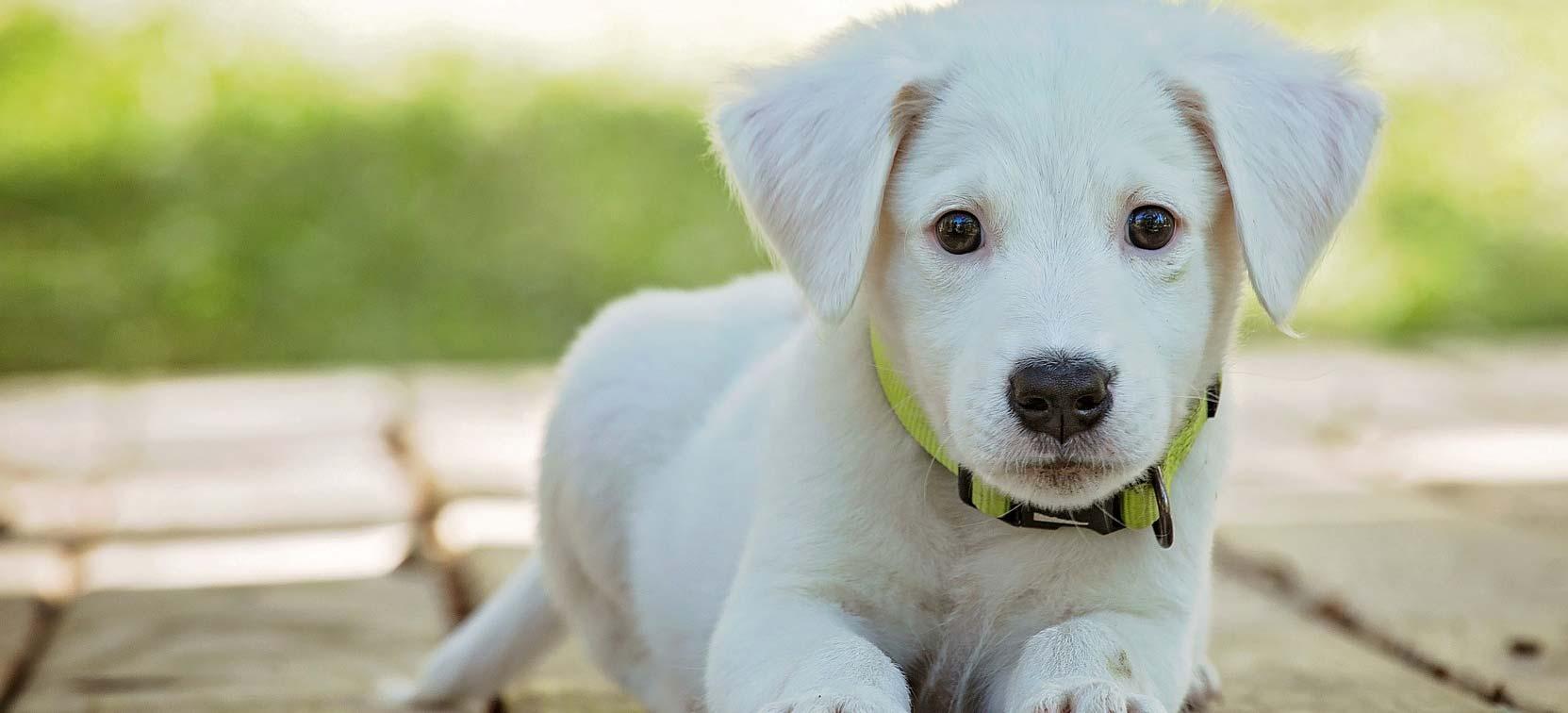 Honden Dier Medisch Centrum Goor