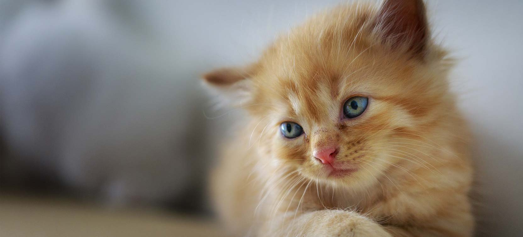 Katten Dier Medisch Centrum Goor
