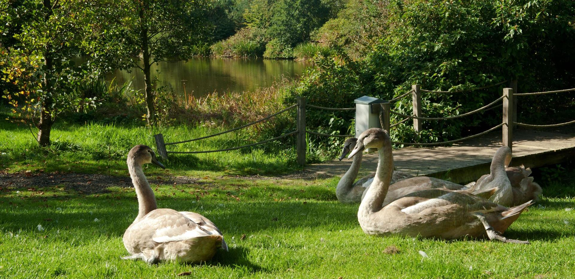 Fellmoor Park 2015 0052_preview.jpeg