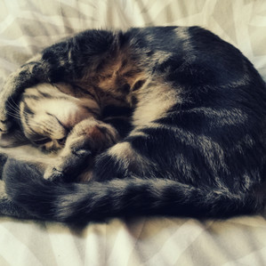 Be More Cat: giving stress the middle finger