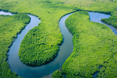Aerial view of Amazon rainforest in Braz