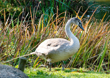 Fellmoor Park 2015-148_preview.jpeg