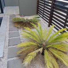 planter BEFORE 1.jpg