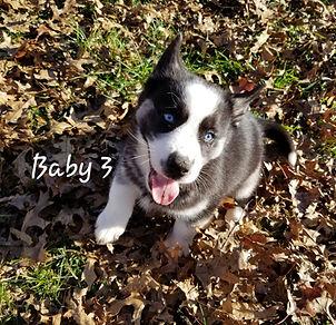 Baby 3 (2).jpg
