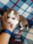 Baby 6 (2).jpg