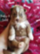 Baby 2 (2).jpg