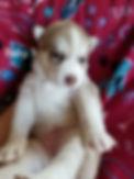 Baby 3.jpg