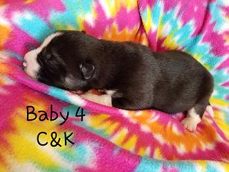 Baby 4 (4).jpg