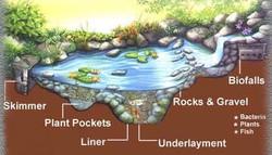 Aquas ecosystem
