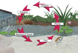 Bog Ecosystem