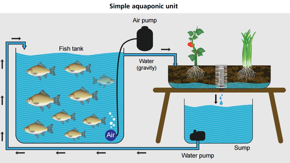 gravity feed aqua