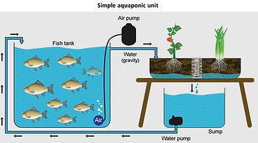 Gravity feed Aquaponics