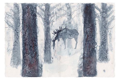 "Moose Kiss 13.3"" x 20"" (33.78 x 50.8 cm)"