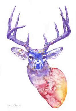 Rainbow deer