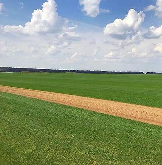 оптово-розничная продажа рулонного посевного газона, устройство системы автономного полива, доставка песка, чернозёма, щебня, почвы, уход за газоном