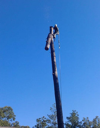 Tree Service, Best, Professional, Experienced, Recommended, Houston Area, Magnolia, Tomball, Woodlands, Conroe, Cypress, Free Estimate, Cut Tree, Storm Damage, Climber, Cardenas Tree Service, Sun, Cardenastreeservice.com, Stump Grinding, Tree Trimming