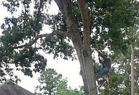 Tree Service, Best, Professional, Experienced, Recommended, Houston Area, Magnolia, Tomball, Woodlands, Conroe, Cypress, Free Estimate, Cut Tree, Haul Off, Mulch, Climber, Cardenas Tree Service, Sun, cardenastreeservice.com