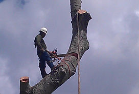 Tree Service, Best, Professional, Experienced, Recommended, Houston Area, Magnolia, Tomball, Woodlands, Conroe, Cypress, Free Estimate, Cut Tree, Haul Off, Mulch, Climber, Cardenas Tree Service, Sun