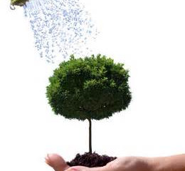 how much water do my trees need?