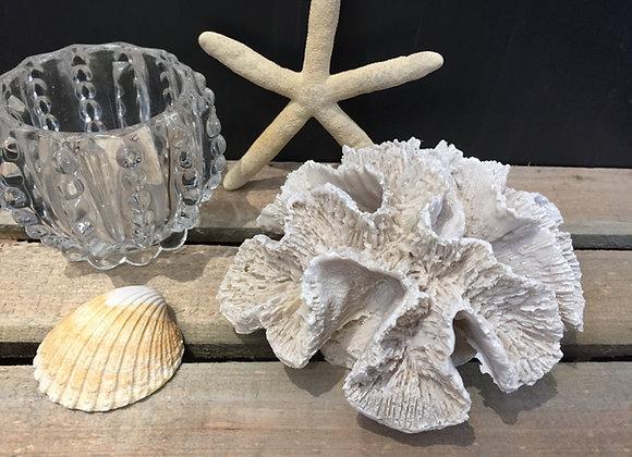 Gisela Graham small frill resin coral decorative ornament